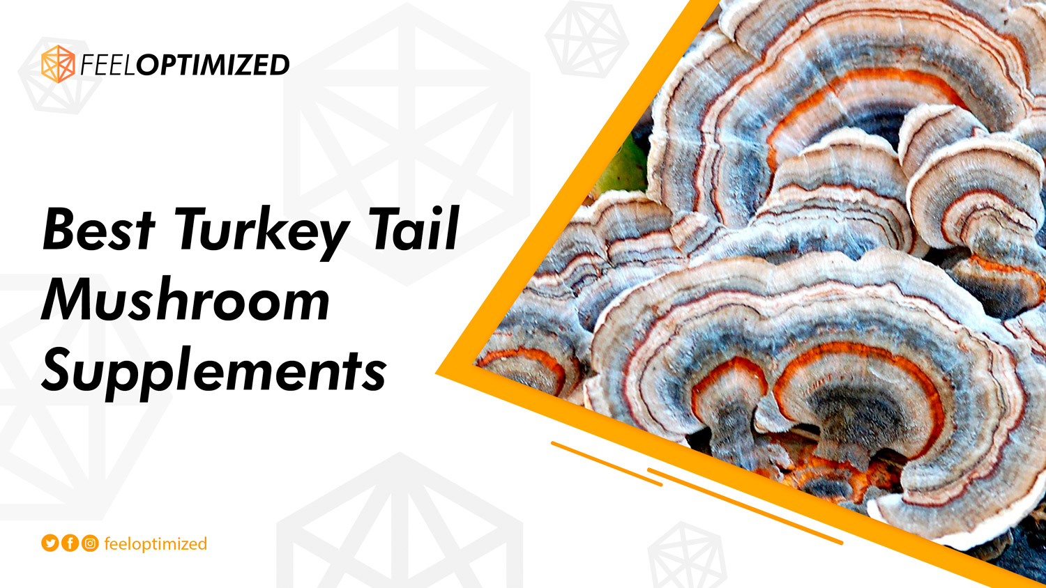 best-turkey-tail-mushroom-supplements